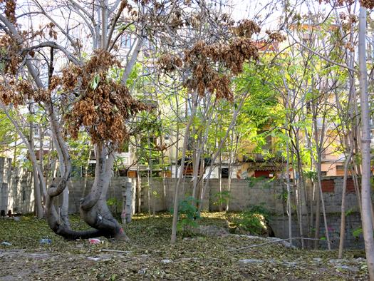 bosque urbano el carmen adrián torres astaburuaga_br